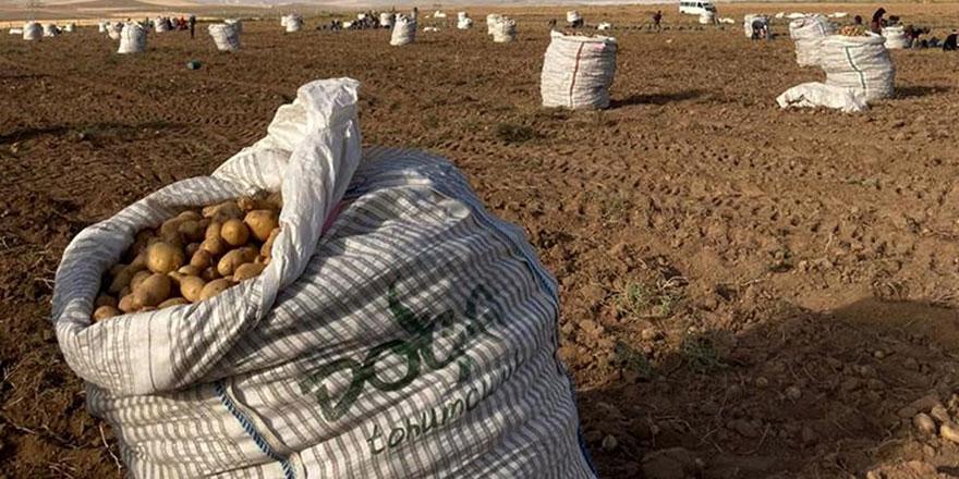 Kırşehir patates üretiminde alternatif hale geliyor