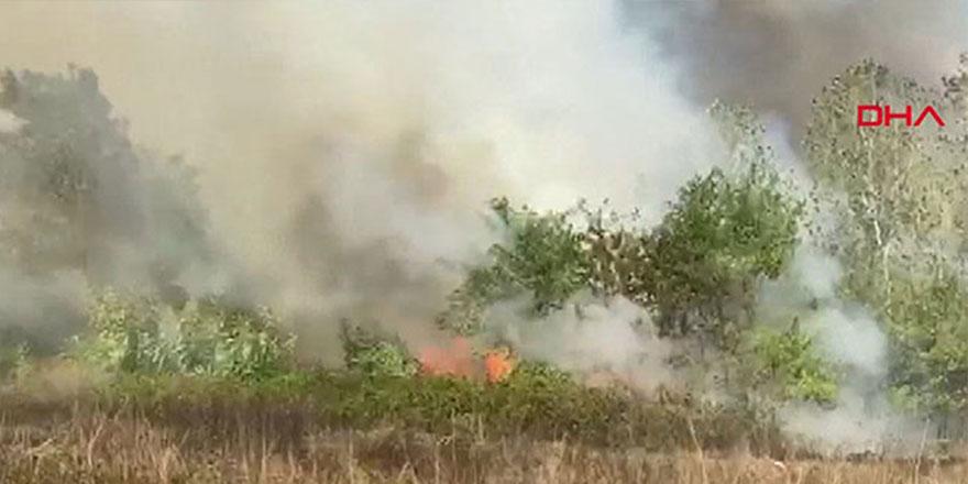 Samsun'da korkutan orman yangını!