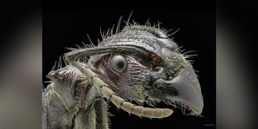 Sizce bu hangi hayvan? Okuyunca gözlerinize inanamayacaksınız