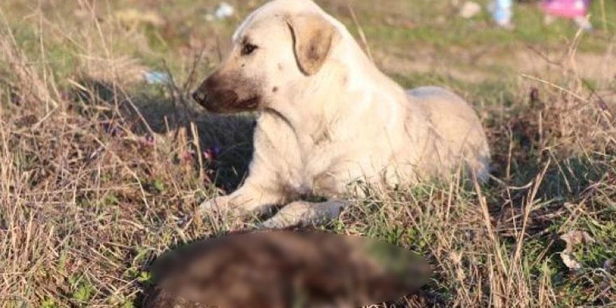 Edirne'de korkunç olay! 8 yavru köpek yakılarak öldürülmüş halde bulundu