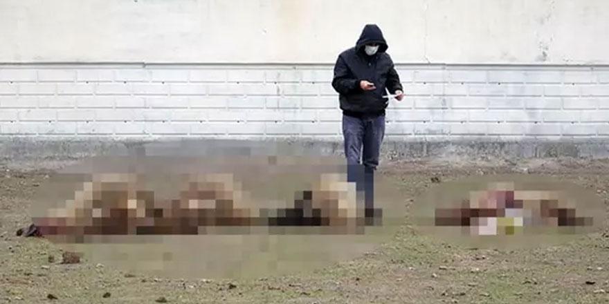 Konya'da 26 koyun otlanırken bilinmeyen bir nedenle öldü