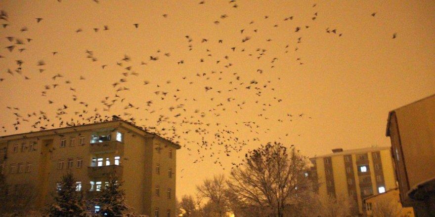 Korku filmi sahnelerini aratmadı Gece ortaya çıktılar Tüm şehir uyandı