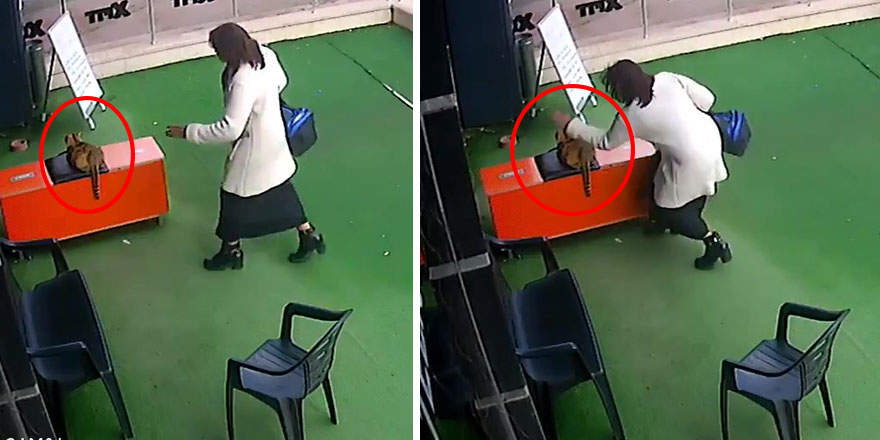 Ankara'da bir kadın hamile kediye şiddet uyguladı! O anlara tepki yağdı