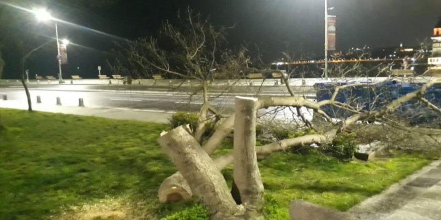 Kız Kulesi'nin karşısındaki ağaçları kesen 4 kişi, yakalandı