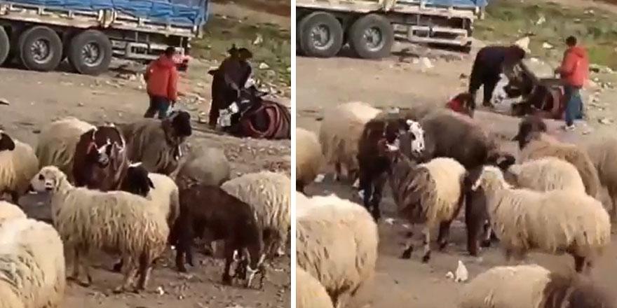 Eşeğini döven çobana verilen ceza şoke etti!