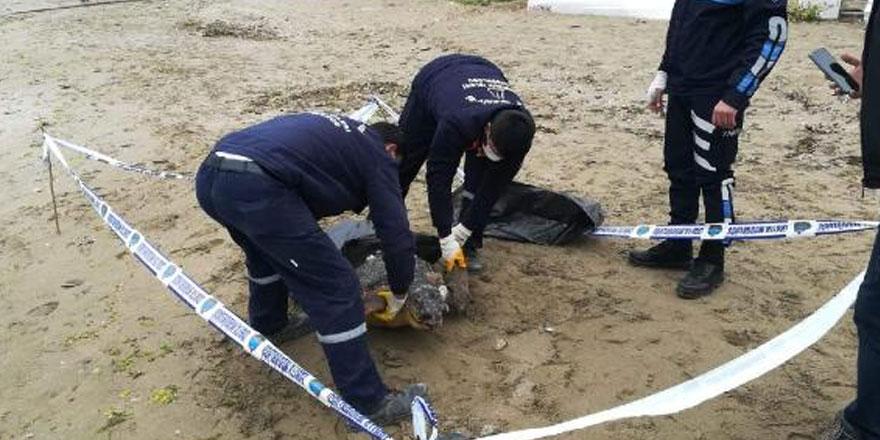 Silivri'de 90 kiloluk caretta caretta ölü bulundu