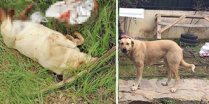 Muğla'da vicdansızlar sokak köpeğini öldürüp...