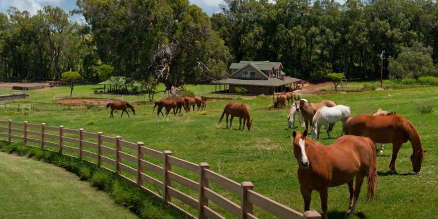 MHP'li Fadıl Keskin sessizliğini bozdu! Kaçırılan 100 at ile ilgili flaş gelişme