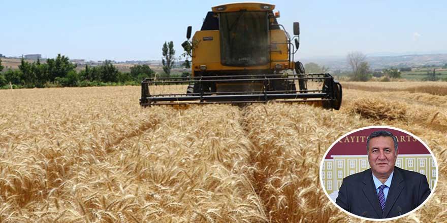 Buğdayda tehlike çanları! CHP'li vekil en büyük riski gözler önüne serdi