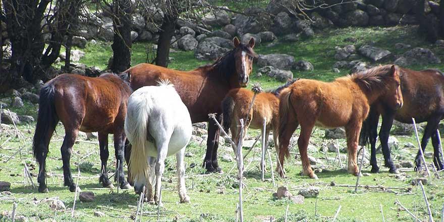 İstanbul Tarım ve Orman İl Müdürlüğü'nden Ekrem İmamoğlu'na atlarla ilgili yanıt!