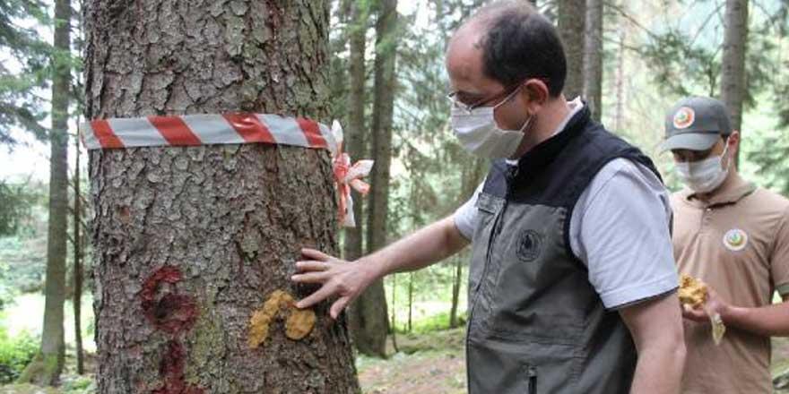 Karadeniz'de ilk kez görüldü! Katil arılar için harekete geçildi