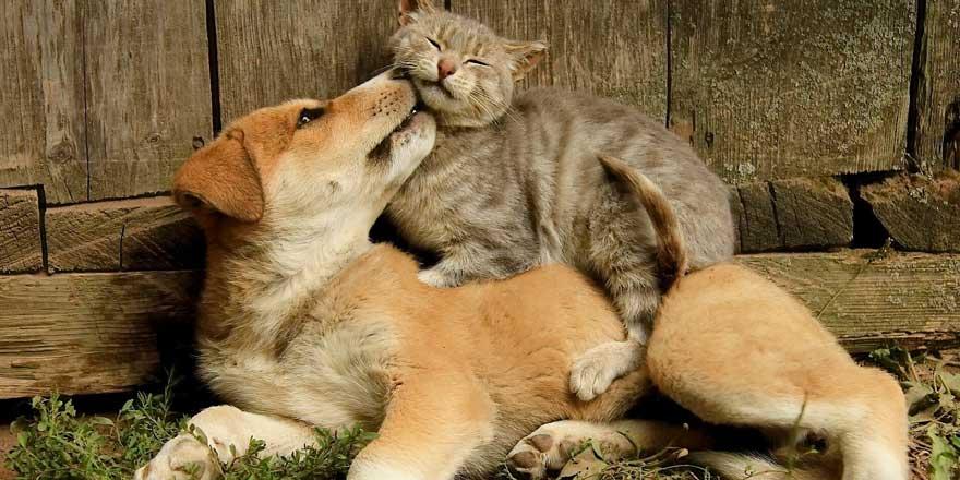 Detayları neler? Hayvanları Koruma Kanunu teklifi Meclis'te