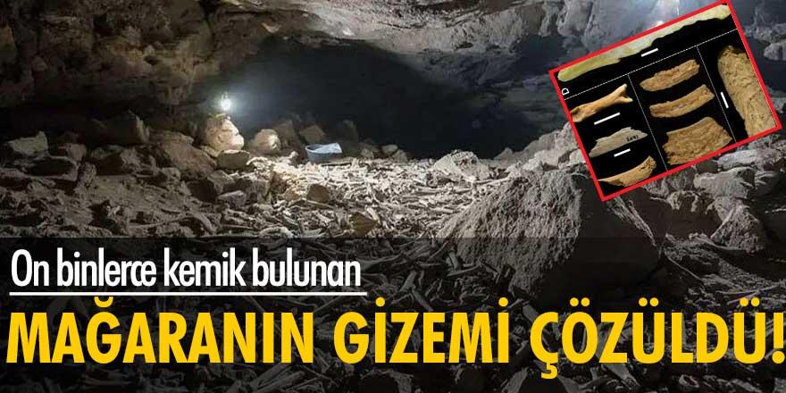 On binlerce kemik bulunan mağaranın gizemi çözüldü!