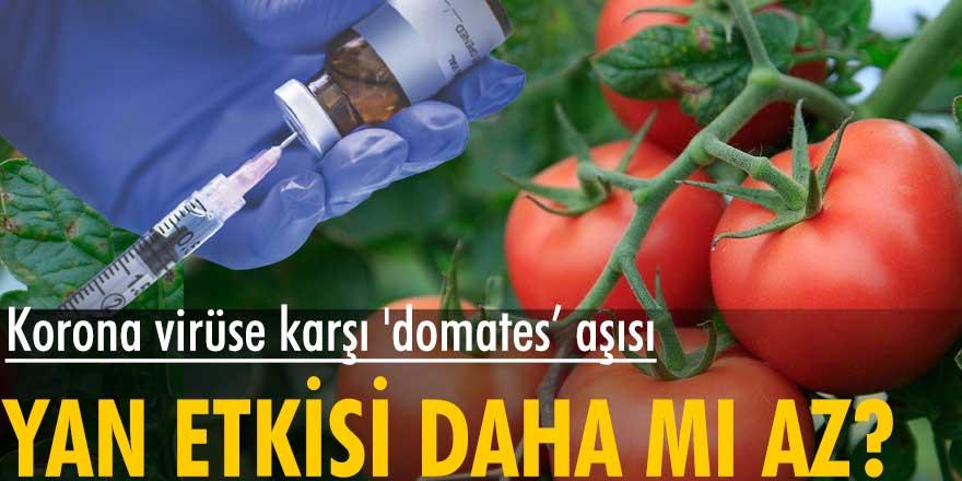 Özbekistan'da korona virüse karşı 'domates' aşısı geliştirildi