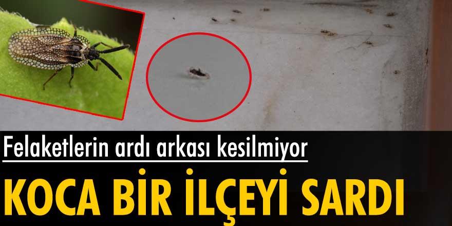 Felaketlerin ardı arkası kesilmiyor! İstanbul Sultangazi ilçesini 'dantel böceği' sardı
