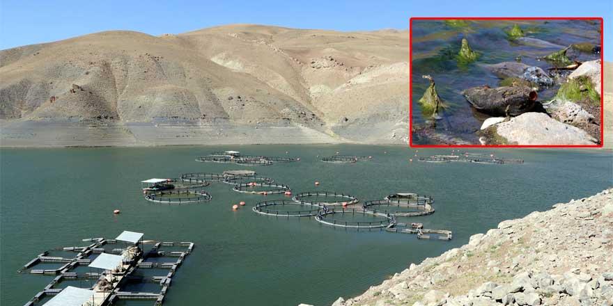 Van'daki balık ölümlerinin sebebi belli oldu