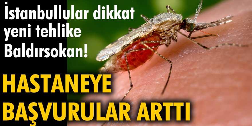 İstanbullular dikkat yeni tehlike Baldırsokan! Hastaneye başvurular arttı