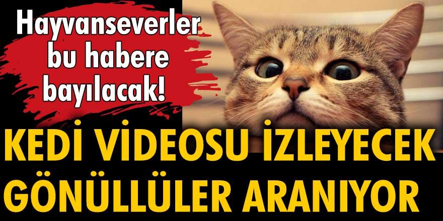 Hayvanseverler bu habere bayılacak: Kedi videosu izleyecek gönüllüler aranıyor