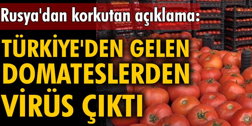 Rusya'dan korkutan açıklama: Türkiye'den gelen domateslerden virüs çıktı