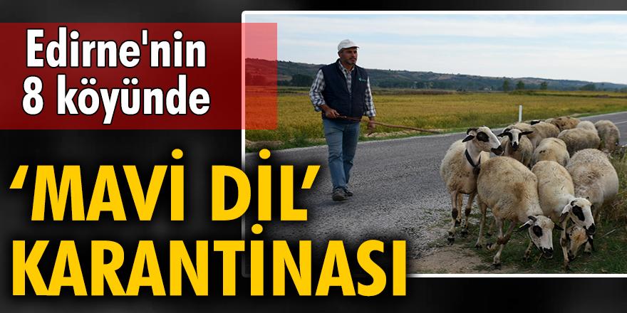 Edirne'nin 8 köyünde 'mavi dil' karantinası