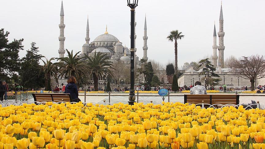 İstanbul'da laleler açtı