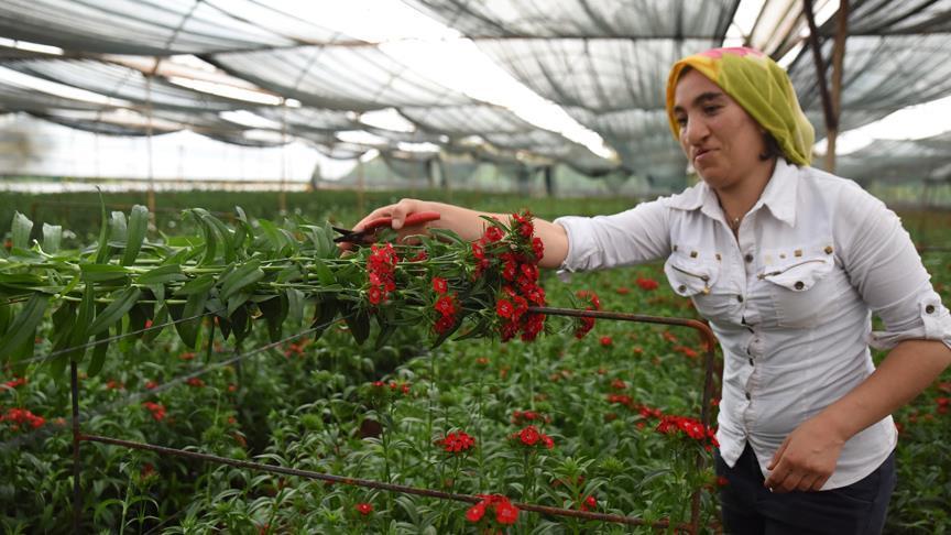 'Anneler Günü yerli çiçekçilere yarayacak'