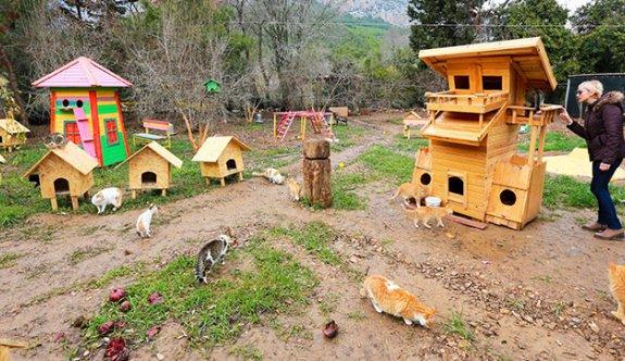 """Edirne'ye """"kedi köyü"""""""