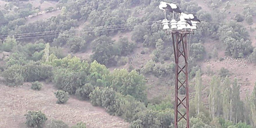 Balıkesir'de 'leylekler ölmesin' elektrik kesintisi!