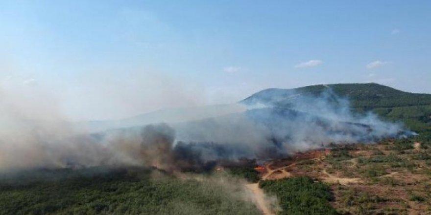 Keşan'daki orman yangınında son gelişme!