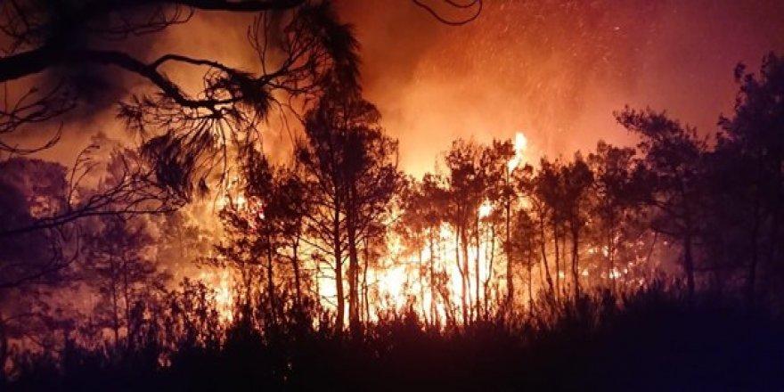 Muğla Ortaca'da yangın