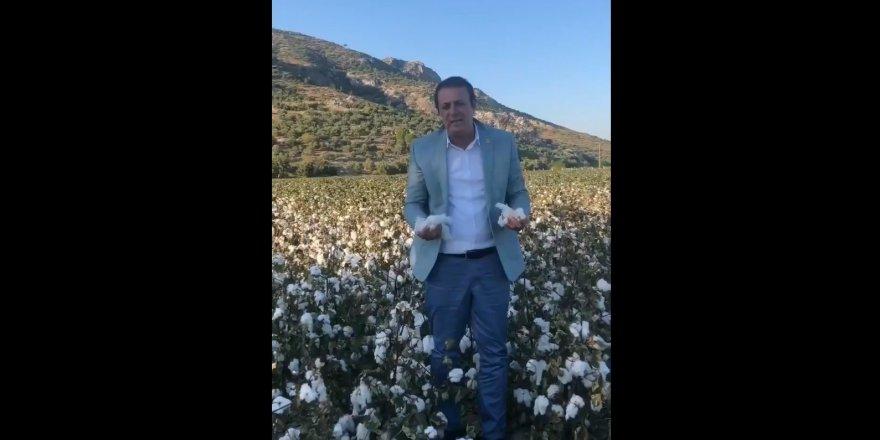CHP'li Hüseyin Yıldız: Pamuk üreticileri perişan
