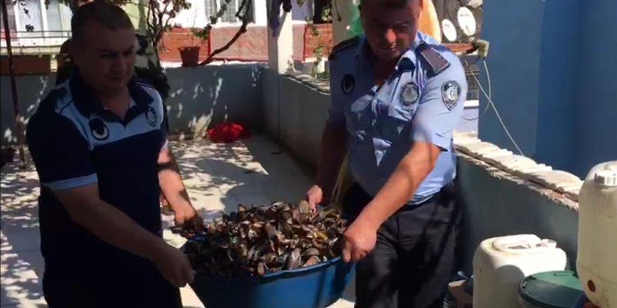 Sağlıksız koşullarda üretilen 100 kilo midyeye el konuldu
