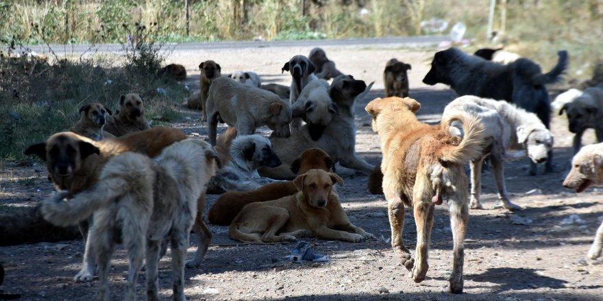 Sokak köpekleri 'bakımsızlıktan ölüyor' iddiası
