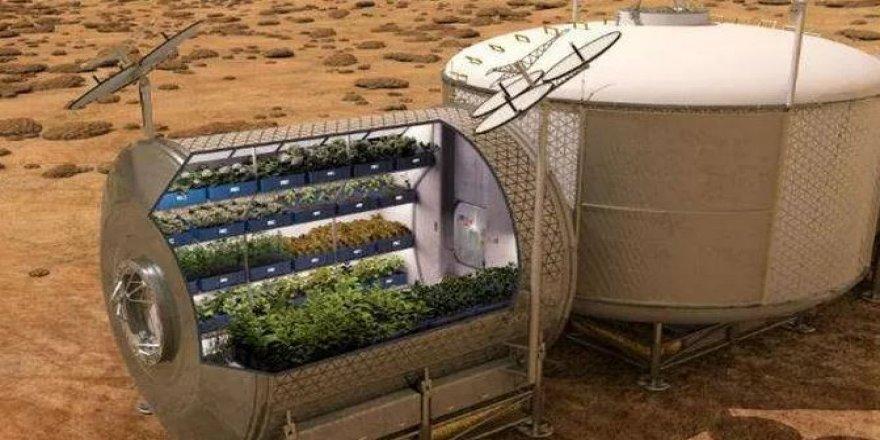 Bilim insanları, yapay Mars ve Ay toprağında sebze yetiştirdi