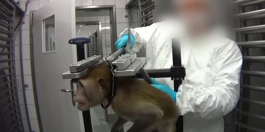 Hayvan deneyleri yapan laboratuvar Avrupa'yı ayağa kaldırdı