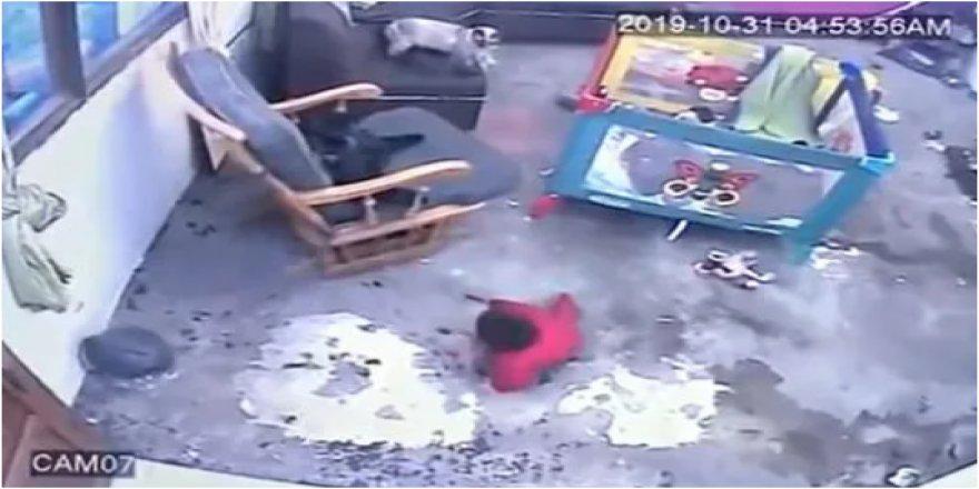 Kahraman kedi bebeğin hayatını böyle kurtardı!