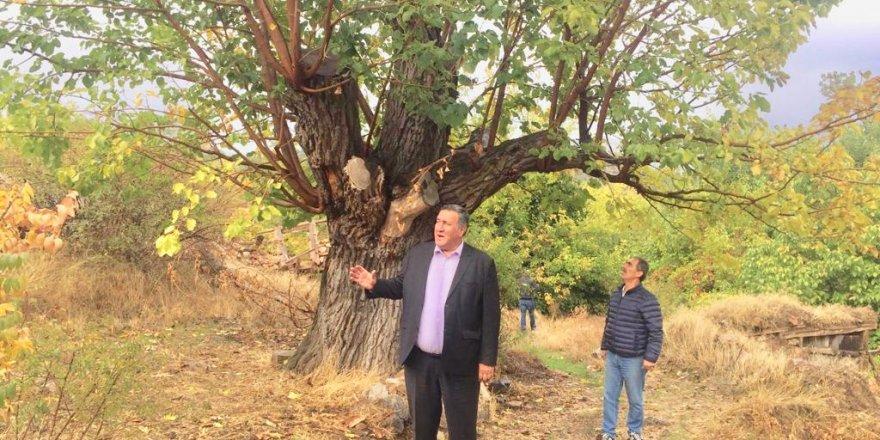 Atatürk'ün köyü sahipsiz kaldı
