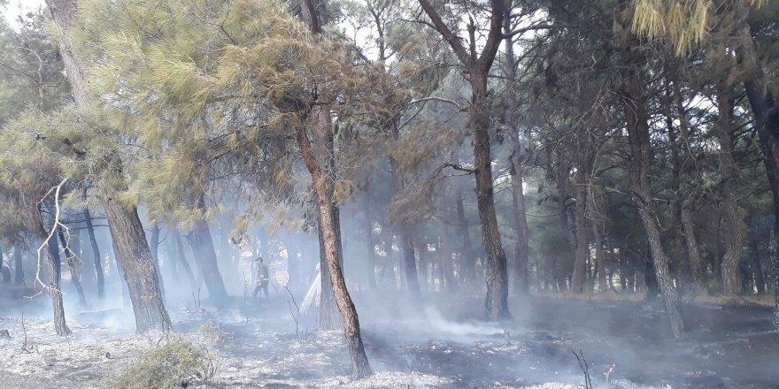 Orman yangınında 20 dönüm alan kül oldu