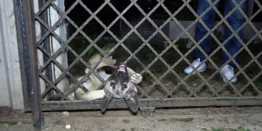 Başı mezarlık kapısına sıkışan köpeği itfaiye böyle kurtardı