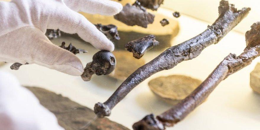 Dik Yürüyen 11 Milyon Yıllık Maymun Fosili Bulundu