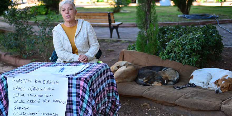 Hayvansever kadından sokak köpekleri tepkisi!