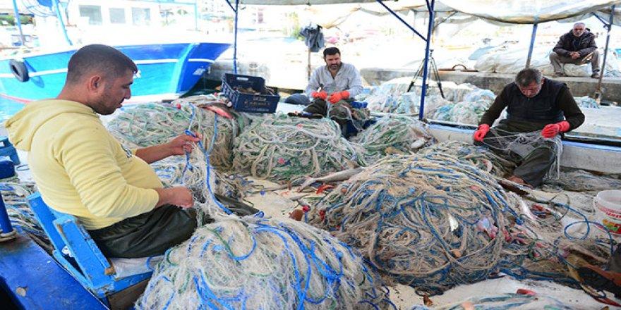 Balon balıkları Kızıldeniz'e kaçtı