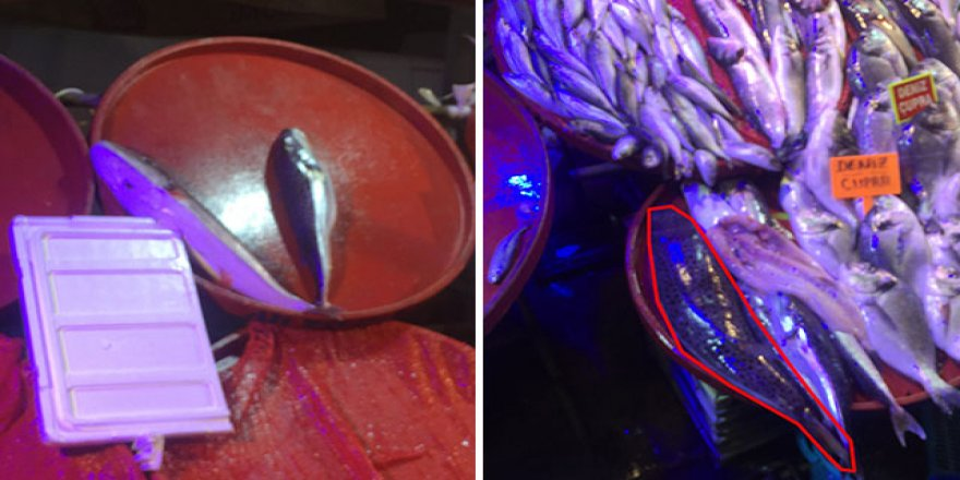 Tezgahında zehirli 'balon balığı' sergiledi
