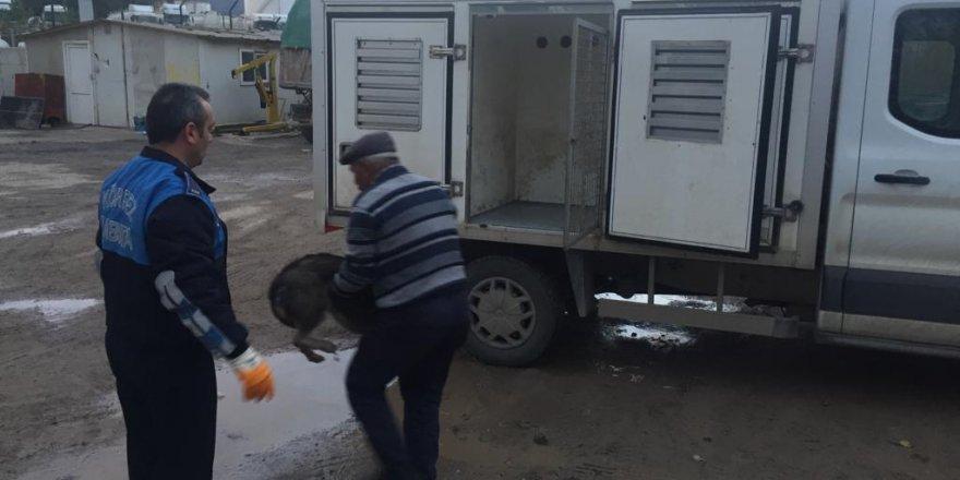 Sokak köpeğini av tüfeğiyle vurmuştu: Gözaltına alındı