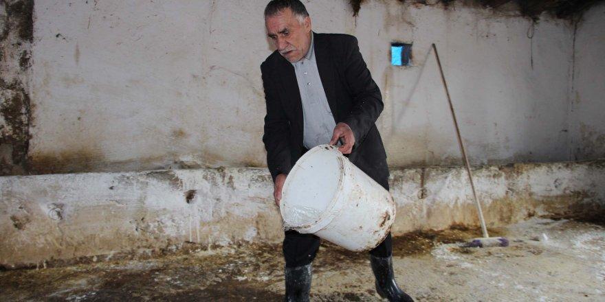 Kırişehir'de şarbon tehlikesi: Sayı 28'e çıktı