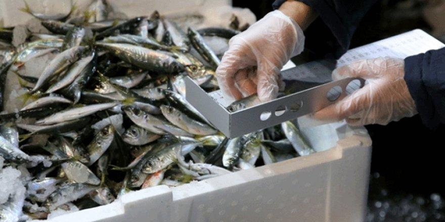 Marmara Denizi'nde 53 ton balığa el konuldu!