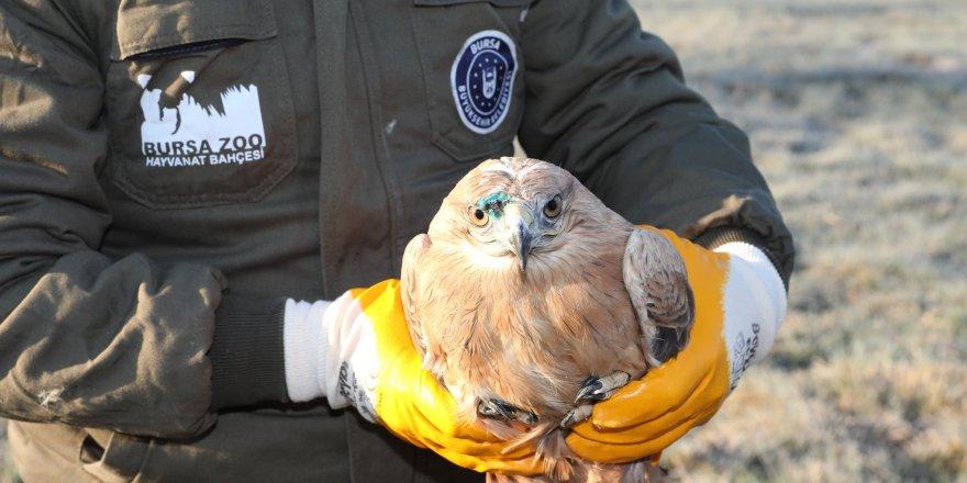 Yaralı şahin, tedavisinin ardından doğaya salındı