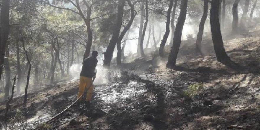 Burhaniye'de 4 dekar kızılçam ormanı yandı