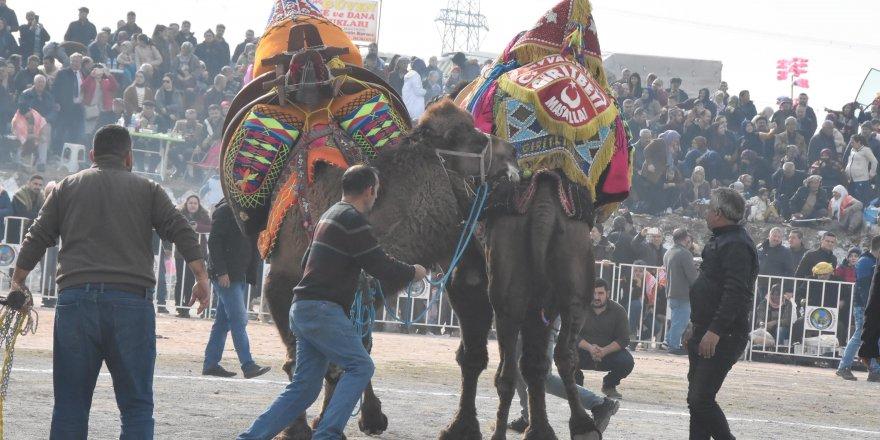 Menemen'de deve güreşlerine, HAYTAP'tan tepki