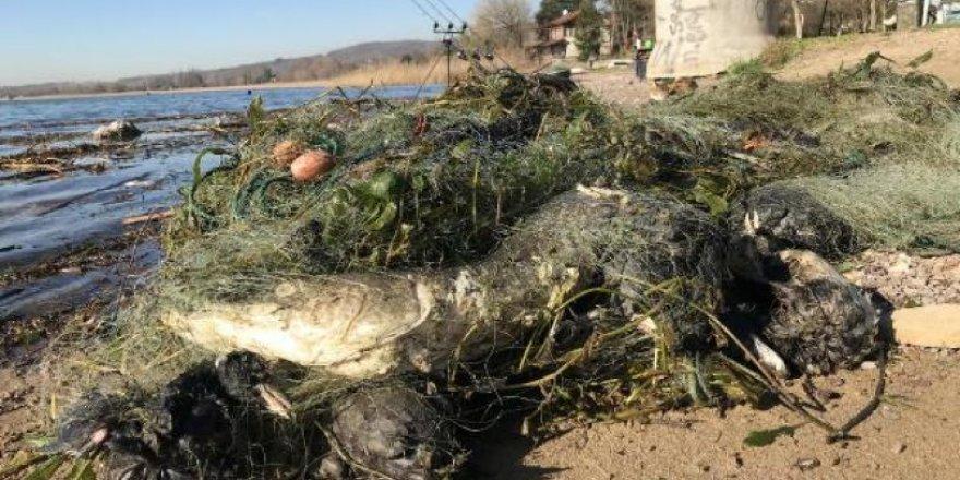 Sapanca Gölü'nde 'hayalet ağ' katliamı!